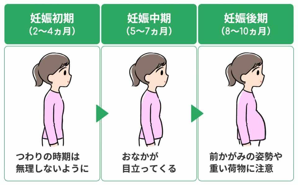 妊娠初期:つわりの時期はむりをしないように。妊娠中期:おなかが目立ってくる。妊娠後期:前かがみの姿勢や重い荷物に注意
