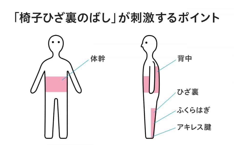 【「椅子ひざ裏のばし」が刺激するポイント】体幹・背中・ひざ裏・ふくらはぎ・アキレス腱