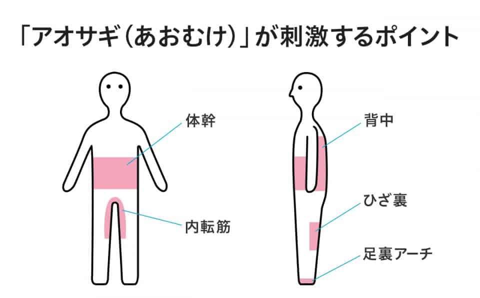 アオサギ(あおむけ)が刺激するポイント:体幹・内転筋・背中・ひざ裏・足裏アーチ