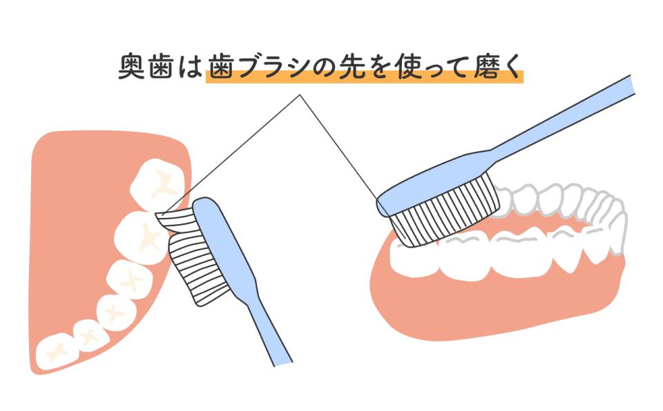 奥歯の磨き方:奥歯は歯ブラシの先を使って磨く